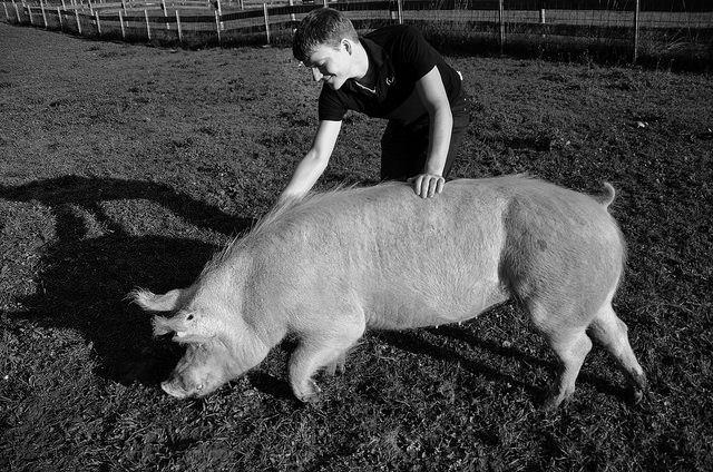 Dennis Vahlenkamp mit Schwein Totoro, Foto: Erdlingshof